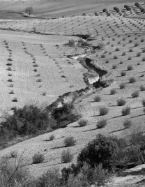Spain Landscape